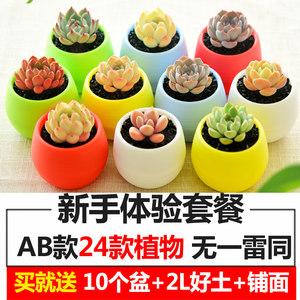 凯天花航植物花盆 7
