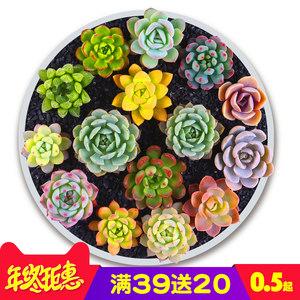 凯天花航植物花盆 5