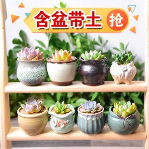 凯天花航植物花盆 3